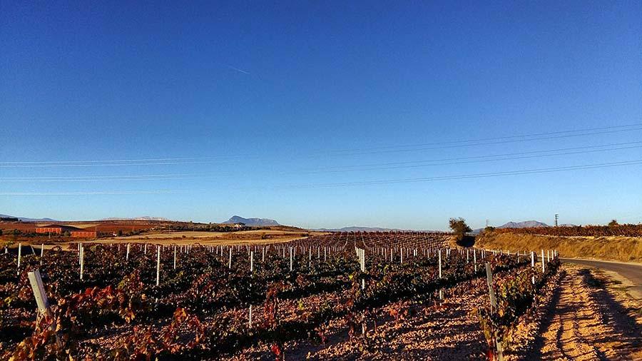 Vineyards near Logrono, Spain