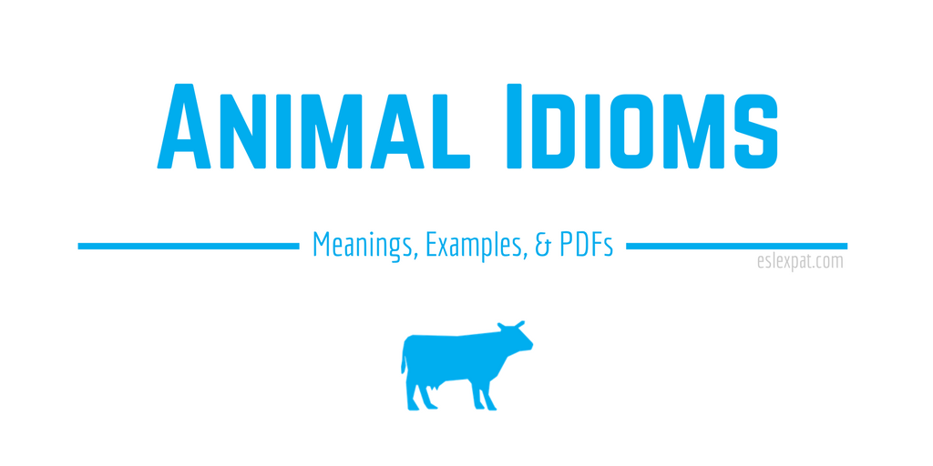 Animal Idioms List With Meanings Examples Pdfs Esl Expat