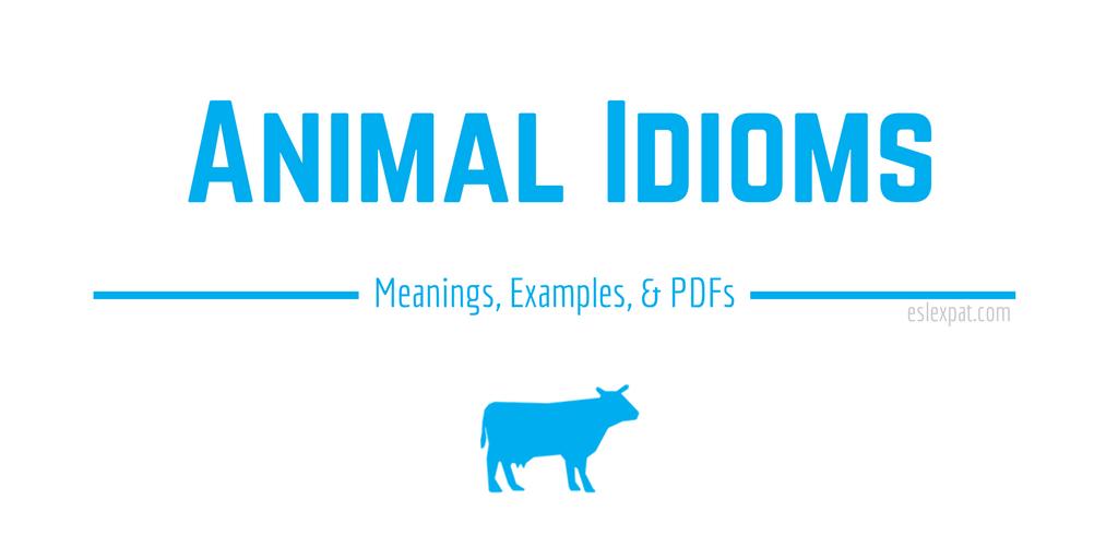 Animal Idioms List