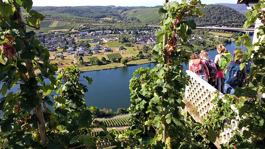 Teaching English in Germany - Vineyards