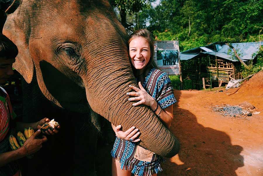 TEFL Thailand - Elephant